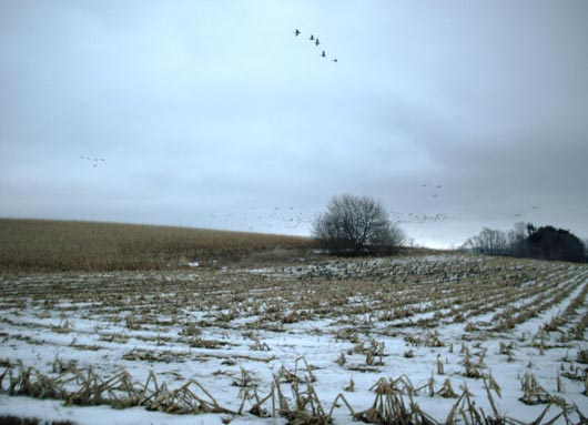 Olmsted Winter Field